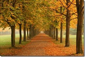Autumn_trees_in_Dresden
